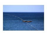 И зубастая акула эту сетку укусила.. Фотограф: vikirin  Просмотров: 2891 Комментариев: 0