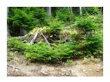 Название: В лесной прибрежной полосе елочки сами себе сеются,для них там идеальный микроклимат Фотоальбом: Привет из Комсомольского 14 июля 07. И 4-5 августа Категория: Туризм, путешествия Фотограф: vikirin  Время съемки/редактирования: 2007:08:04 14:39:28 Фотокамера: SONY - DSC-W70 Диафрагма: f/2.8 Выдержка: 10/1600 Фокусное расстояние: 63/10 Светочуствительность: 100   Просмотров: 1499 Комментариев: 0