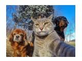 Название: Дружба :) Фотоальбом: Живности-2 Категория: Животные  Просмотров: 43 Комментариев: 0