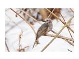 Название: _DSC4426 Фотоальбом: Птички Категория: Животные Фотограф: VictorV  Время съемки/редактирования: 2020:04:02 21:26:30 Фотокамера: SONY - DSLR-A900 Диафрагма: f/6.3 Выдержка: 1/800 Фокусное расстояние: 6000/10    Просмотров: 6 Комментариев: 0