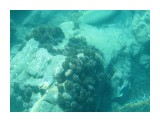 Название: Плантация моских ежиков Фотоальбом: Виды и добыча подводной охоты. Лето 2013г. Категория: Природа Фотограф: Тимофеев И.В.  Время съемки/редактирования: 2007:01:06 03:19:24 Фотокамера: Canon - Canon PowerShot A570 IS Диафрагма: f/2.6 Выдержка: 1/640 Фокусное расстояние: 5800/1000    Просмотров: 458 Комментариев: 0