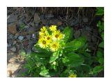 Береговые цветы.. Фотограф: vikirin  Просмотров: 3779 Комментариев: 0