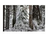 Зимняя сказка.. декабрь..  Фотограф: vikirin  Просмотров: 1591 Комментариев: 0