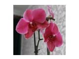 """Название: IMG_3657 Фотоальбом: Мои красотки """"Орхидеи"""" Категория: Цветы  Время съемки/редактирования: 2013:05:03 13:10:06 Фотокамера: Canon - Canon EOS 550D Диафрагма: f/7.1 Выдержка: 1/200 Фокусное расстояние: 35/1    Просмотров: 359 Комментариев: 0"""