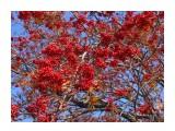 Название: Рясно Фотоальбом: 2008 10 17 Осень в Южном Категория: Природа Фотограф: vikirin  Время съемки/редактирования: 2008:10:17 12:01:23 Фотокамера: Canon - Canon PowerShot SX100 IS Диафрагма: f/4.5 Выдержка: 1/1000 Фокусное расстояние: 10300/1000 Светочуствительность: 200   Просмотров: 4678 Комментариев: 0