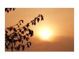 солнышко Фотограф: Гайдаева А.В  Просмотров: 3401 Комментариев: 0