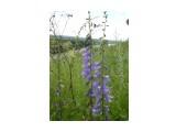 DSC08360 Фотограф: viktorb  Просмотров: 634 Комментариев: 0