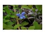 DSC05239 Фотограф: vikirin  Просмотров: 1786 Комментариев: 0