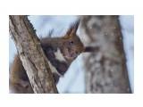 Охота на белку )) 4 Фотограф: VictorV  Просмотров: 435 Комментариев: 0