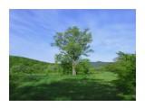 Название: *** Фотоальбом: Разное Категория: Природа Фотограф: Д.В.  Время съемки/редактирования: 2018:06:12 07:52:04 Фотокамера: Canon - Canon PowerShot SX500 IS Диафрагма: f/8.0 Выдержка: 1/160 Фокусное расстояние: 5465/1000    Просмотров: 1979 Комментариев: 0