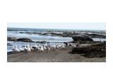 Домашние гуси направились искупаться в Охотском море  Просмотров: 326 Комментариев: 0