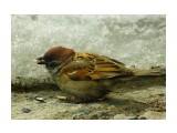 DSC06053q_новый размер Фотограф: В.Дейкин  Просмотров: 938 Комментариев: 0