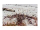 Травочки прибрежные... Фотограф: vikirin  Просмотров: 1087 Комментариев: 0