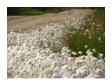 В тундре все время что нибудь цветет... Фотограф: vikirin  Просмотров: 3779 Комментариев: 0