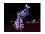 Название: Жар птица Фотоальбом: Новый год Категория: Праздники  Время съемки/редактирования: 2015:12:31 19:47:43 Фотокамера: Canon - Canon EOS 550D Диафрагма: f/4.0 Выдержка: 1/125 Фокусное расстояние: 26/1    Просмотров: 430 Комментариев: 0
