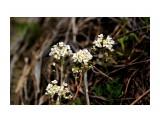 Что за растение? Фотограф: vikirin  Просмотров: 1344 Комментариев: 0