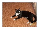 Кошка марамошка  Просмотров: 4012 Комментариев: