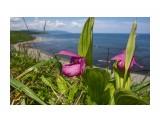 У моря... Фотограф: Tsygankov Yuriy  Просмотров: 622 Комментариев: 0