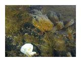 Морские сады Фотограф: vikirin  Просмотров: 3857 Комментариев: 0