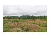Название: Здесь росли пионы обратнойяцевидные и багульник Фотоальбом: Остров Сахалин Категория: Природа  Время съемки/редактирования: 2021:06:14 16:48:13 Фотокамера: Canon - Canon EOS 1200D Диафрагма: f/11.0 Выдержка: 1/160 Фокусное расстояние: 26/1   Описание: В сторону Весточки слева столько срублено деревьев, жалко, растения редкие тут были все на... поуничтожили враги Сахалина.  Просмотров: 167 Комментариев: 0