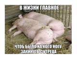 Ухахаха  Просмотров: 63 Комментариев: