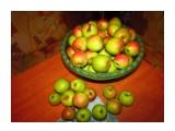 Название: Банан с яблоками. Фотоальбом: Сад, огород Категория: Разное Фотограф: Mitrofan Описание: 9 октября 2014  Просмотров: 2035 Комментариев: 3