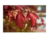 Название: DSC07413 Фотоальбом: Осень Категория: Природа Фотограф: VictorV  Время съемки/редактирования: 2020:10:28 22:42:18 Фотокамера: SONY - SLT-A99 Диафрагма: f/2.8 Выдержка: 1/8000 Фокусное расстояние: 500/10    Просмотров: 105 Комментариев: 0