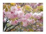 Название: DSCN4323 Фотоальбом: Япония, апрель 2019 Категория: Туризм, путешествия  Время съемки/редактирования: 2019:04:23 00:36:25 Фотокамера: NIKON - COOLPIX S3100 Диафрагма: f/3.2 Выдержка: 10/1000 Фокусное расстояние: 4600/1000    Просмотров: 294 Комментариев: 0