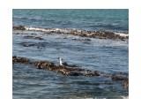 Морская капуста и чайка