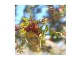 Название: 662A3FE8-A344-4E7E-B501-34CBCF3ED54C Фотоальбом: Осень Категория: Природа  Время съемки/редактирования: 2021:10:16 13:23:53 Фотокамера: OLYMPUS IMAGING CORP.   - E-M1             Диафрагма: f/1.0 Выдержка: 1/640 Фокусное расстояние: 0/1    Просмотров: 34 Комментариев: 0