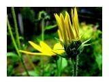 Полевые цветы  Просмотров: 1185 Комментариев: