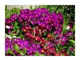 Название: DSC00284_н Фотоальбом: Цветы, деревья и травы Категория: Цветы  Время съемки/редактирования: 2017:05:21 15:57:48 Фотокамера: SONY - DSC-HX300 Диафрагма: f/5.6 Выдержка: 1/320 Фокусное расстояние: 7419/100    Просмотров: 28 Комментариев: 1