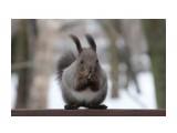 Название: Красотка Фотоальбом: Разное Категория: Животные  Время съемки/редактирования: 2021:03:05 14:46:14 Фотокамера: Canon - Canon EOS 1200D Диафрагма: f/5.6 Выдержка: 1/1600 Фокусное расстояние: 135/1    Просмотров: 182 Комментариев: 2