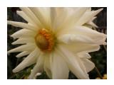 Название: P9084034 Фотоальбом: Разное Категория: Цветы  Время съемки/редактирования: 2013:09:08 11:06:50 Фотокамера: OLYMPUS IMAGING CORP.   - T105,T100,X36 Диафрагма: f/4.6 Выдержка: 1/640 Фокусное расстояние: 630/100    Просмотров: 1088 Комментариев: 0