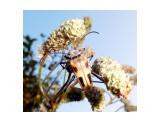 жук на озере Хазарском