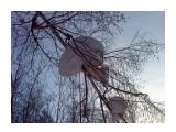 Пригнули березу Фотограф: vikirin  Просмотров: 3223 Комментариев: 0