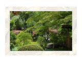 сады киото / marka_2007 / 60х80 см  Просмотров: 575 Комментариев: 0