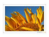 Солнечный Люблю яркие цвета, наша жизнь такая серая...   Просмотров: 1771 Комментариев: