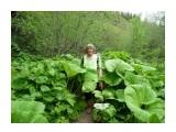 Трава не по пояс, в по голову! Здесь вся зелень, на неделю вперед!  Фотограф: viktorb о. Сахалин. район р. Минеральной!  Просмотров: 1443 Комментариев: 0