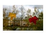 Листопад (1) Южно-Сахалинск  Просмотров: 1440 Комментариев: