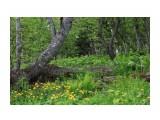 Дикие леса... Фотограф: vikirin  Просмотров: 1810 Комментариев: 0