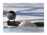 Название: P1190236 Фотоальбом: Птицы на моем окне Категория: Природа  Время съемки/редактирования: 2011:01:19 13:38:22 Фотокамера: OLYMPUS IMAGING CORP.   - FE250/X800              Диафрагма: f/4.7 Выдержка: 10/5000 Фокусное расстояние: 222/10 Светочуствительность: 64   Просмотров: 250 Комментариев: 0