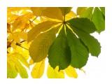 Цветы, деревья и травы  PB010179_н   Просмотров: 141  Комментариев: 0