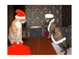 Название: С Новым годом! Фотоальбом: Новый год Категория: Животные  Время съемки/редактирования: 2015:12:31 16:11:09 Фотокамера: Canon - Canon EOS 550D Диафрагма: f/4.0 Выдержка: 1/60 Фокусное расстояние: 18/1    Просмотров: 370 Комментариев: 0