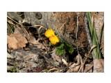Первое весеннее цветение... Фотограф: vikirin  Просмотров: 1676 Комментариев: 0