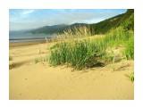 Золотые колосья на берегу моря. Фотограф: vikirin  Просмотров: 3779 Комментариев: 0
