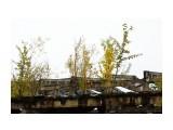 DSC04307 Фотограф: vikirin  Просмотров: 980 Комментариев: 0
