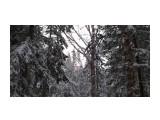В лесу берендеевском... Фотограф: vikirin  Просмотров: 1595 Комментариев: 0