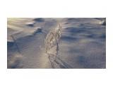 Однажды морозным утром Фотограф: vikirin  Просмотров: 1138 Комментариев: 0