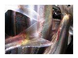Рыбка светится Фотограф: vikirin  Просмотров: 3809 Комментариев: 0